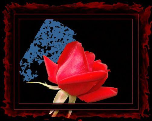 Erotic Flowers #1