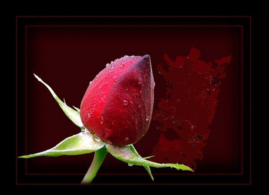 Erotic Flowers #2