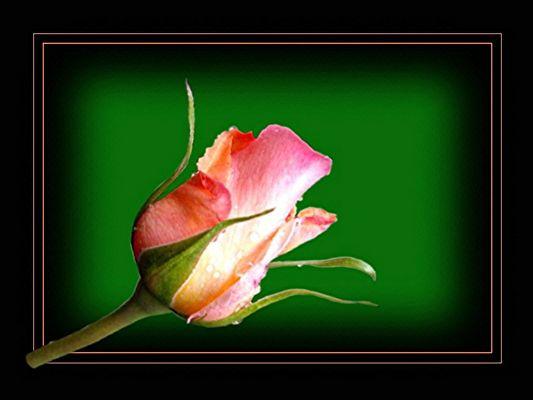 Erotic Flowers #3