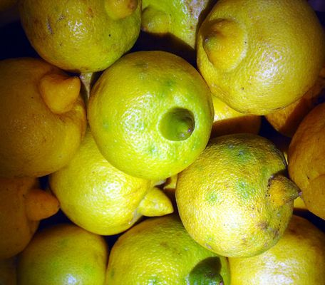 erotic limes