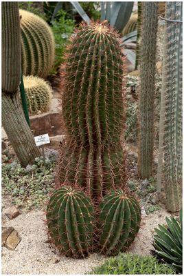 """""""Erotischer Kaktus"""""""