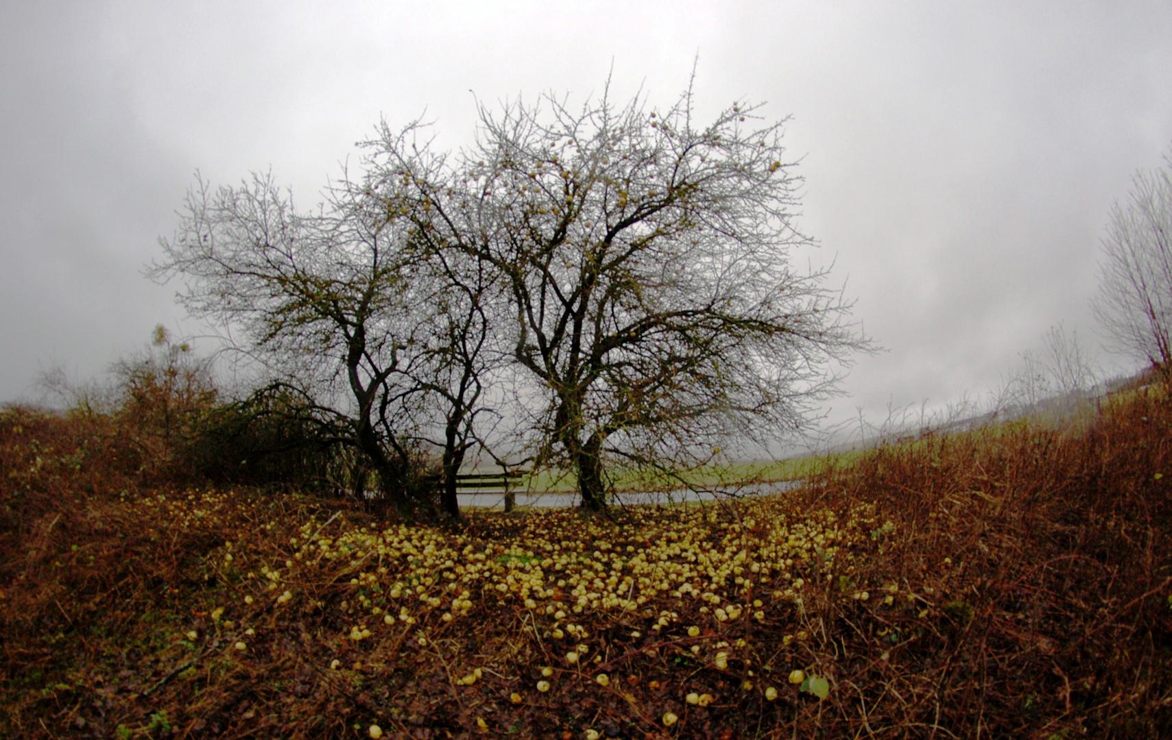 Errinnerung an den Herbst