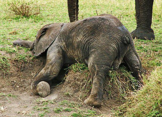 Erschöpfter Elefant