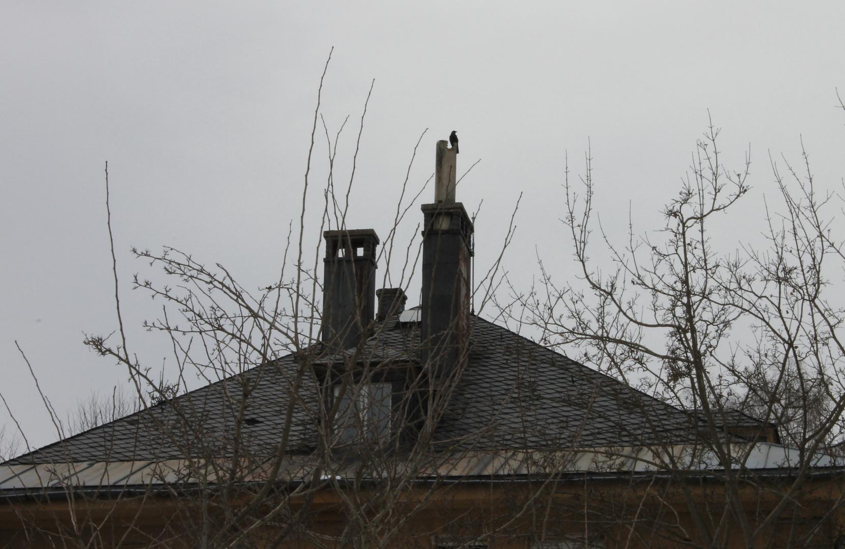 Erst schrie es der Rab vom Dach.......