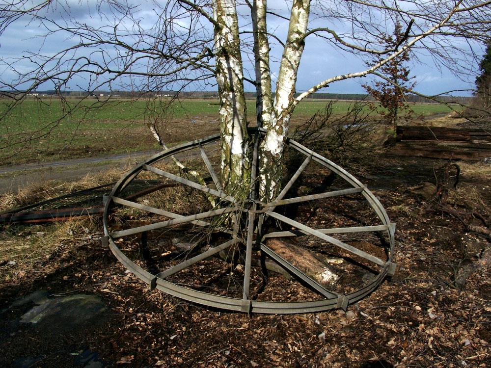 Erst war das Rad und dann die Birke...