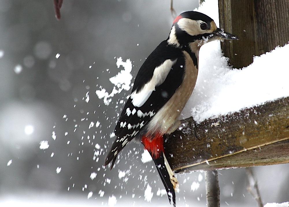 Erst wird Schnee geschaufelt