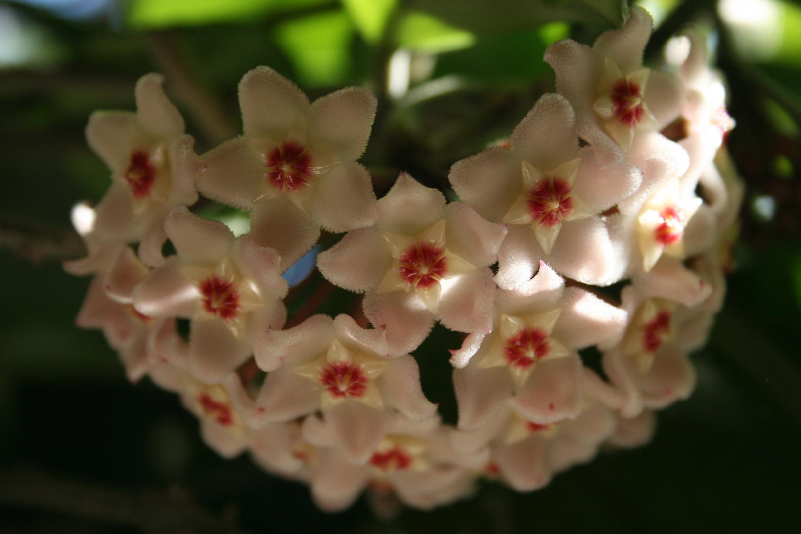 erste Blüte 2013