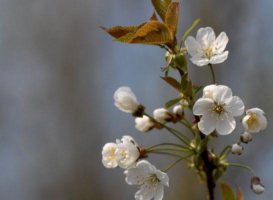 Erste Blüten an den Bäumen...