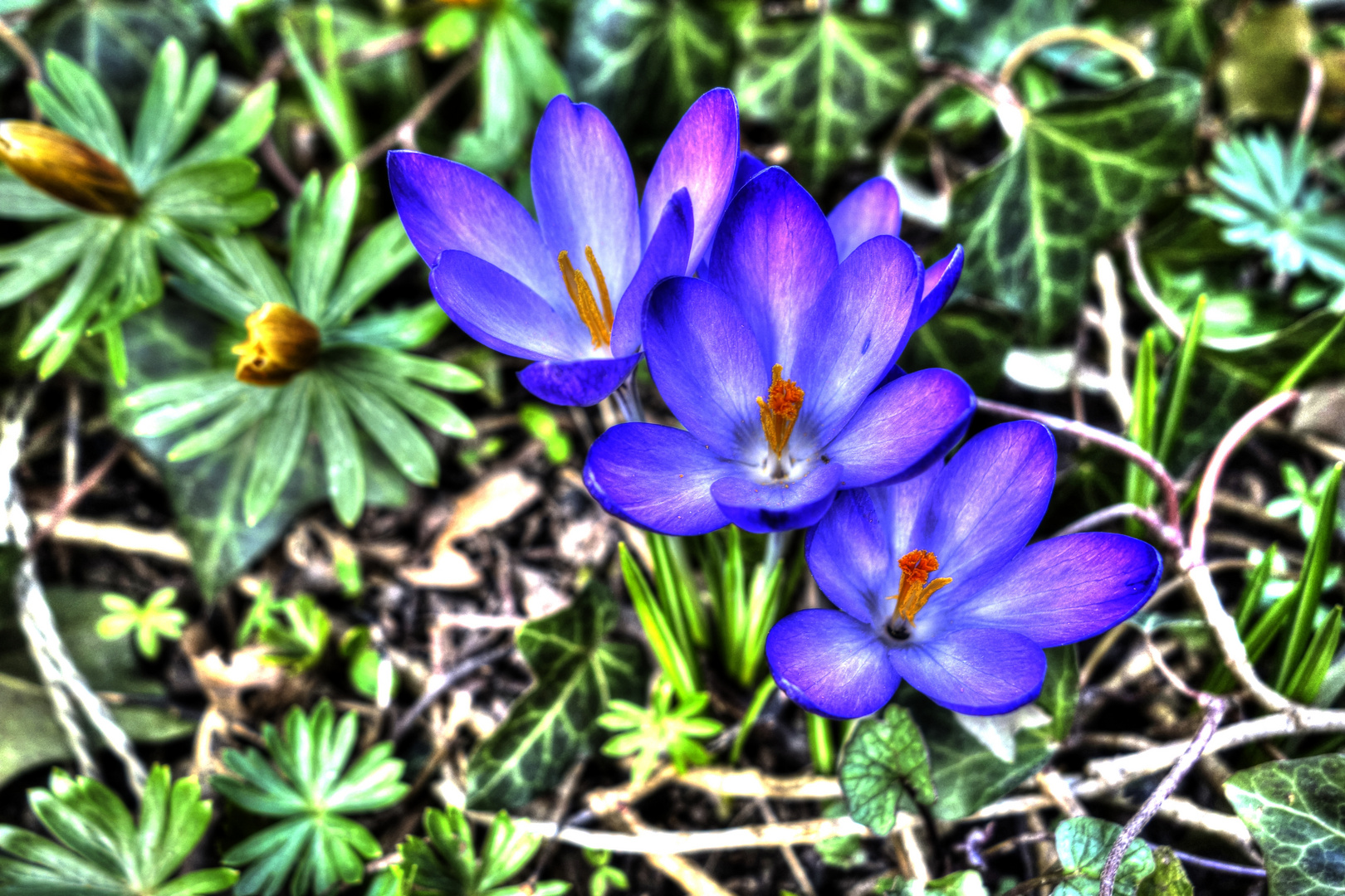 erste Blüten zum Frühlingsbeginn