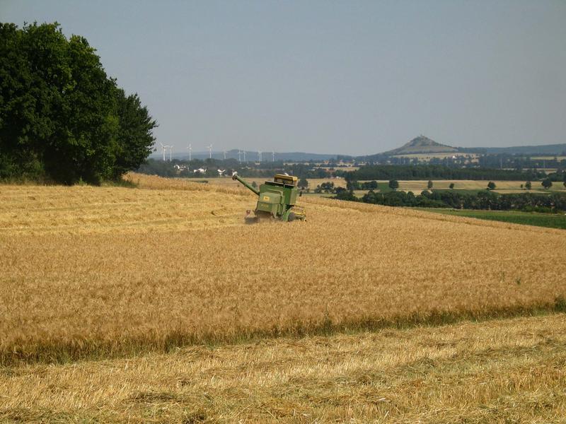 Erste Ernte 2003 im Warburger Land