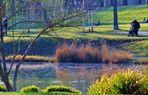 erste Frühlingsanzeichen im Rosensteinpark