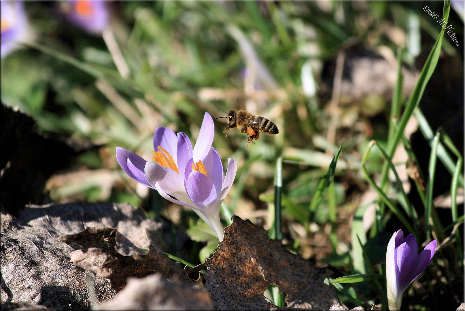 ~~ Erste Frühlingsboten ~~