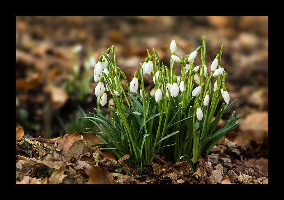 ~Erste Frühlingsboten~