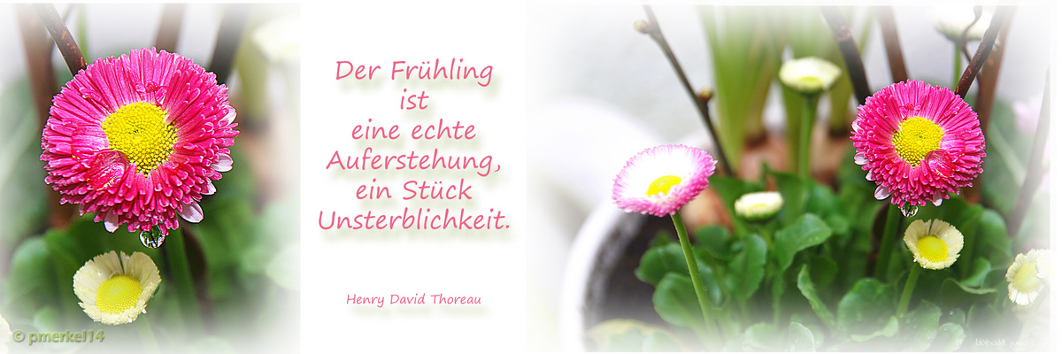 Erste Frühlingsgrüße zum Wochenende...