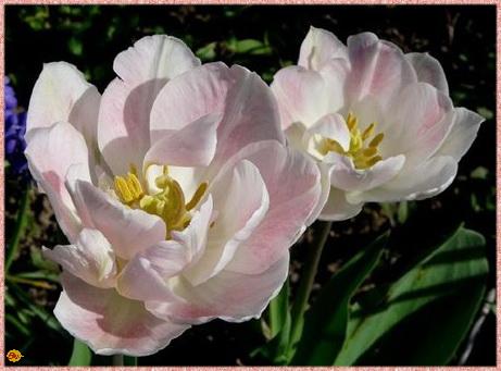 Erste Frühlingszeichen;-))))