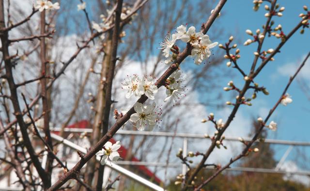 Erste Frühlingszeichen der Natur