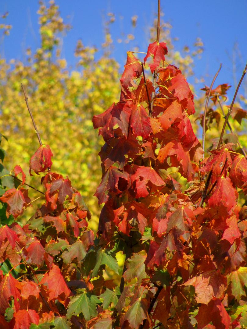 Erste Herbstboten
