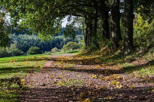 Erste Herbststimmung auf einem Feldweg