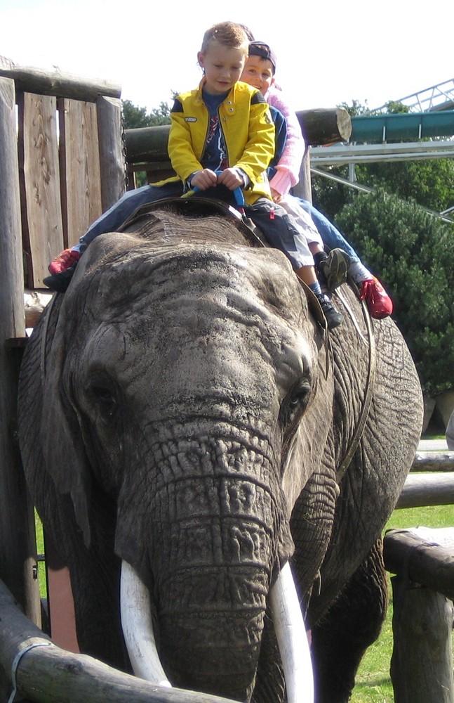 Erste Mal auf einen Elefant