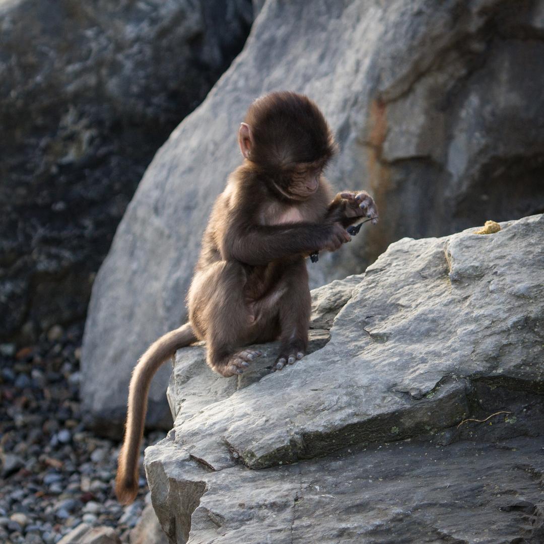 Erste Nagelpflege - Zoo Zürich