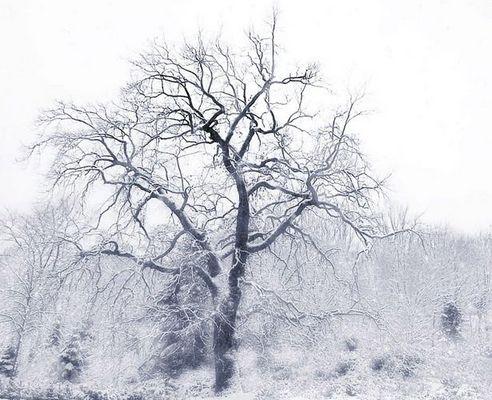 Erste Schnee