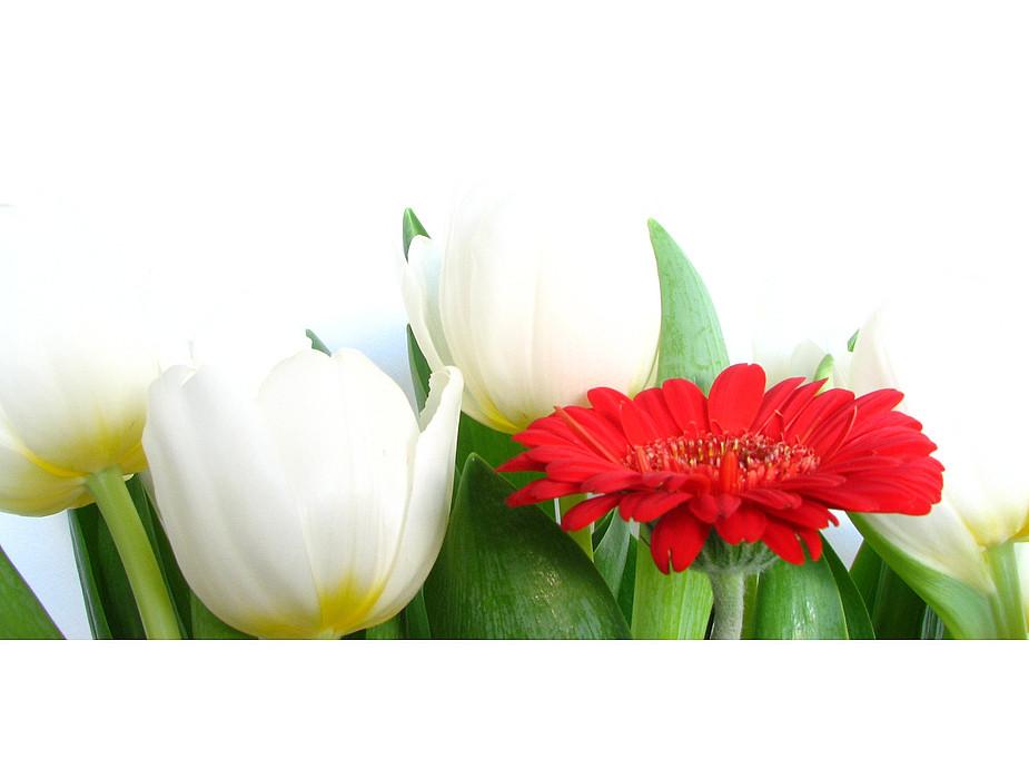 Erste Tulpen 1