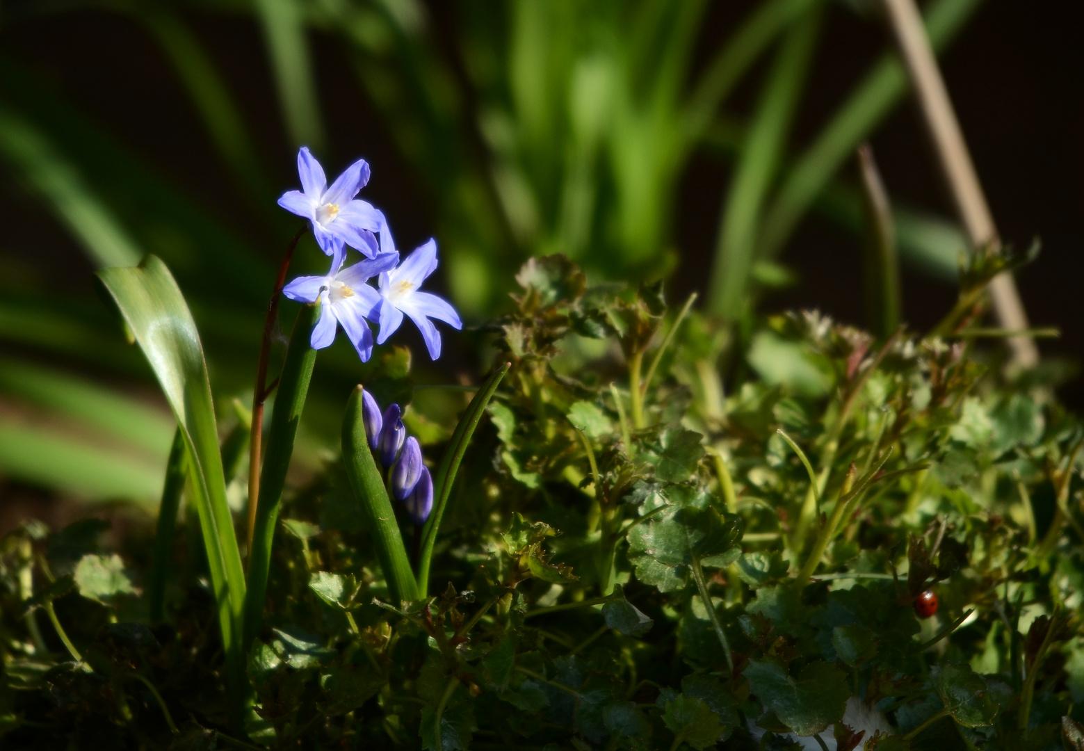 Erste zarte Frühlingsboten
