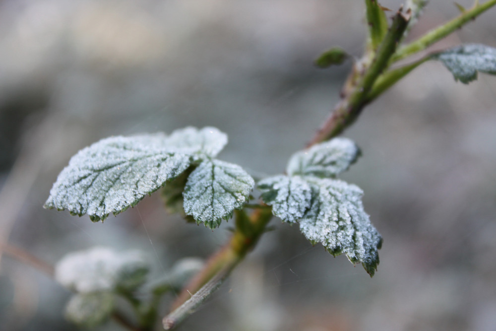 Erster Frost 2009