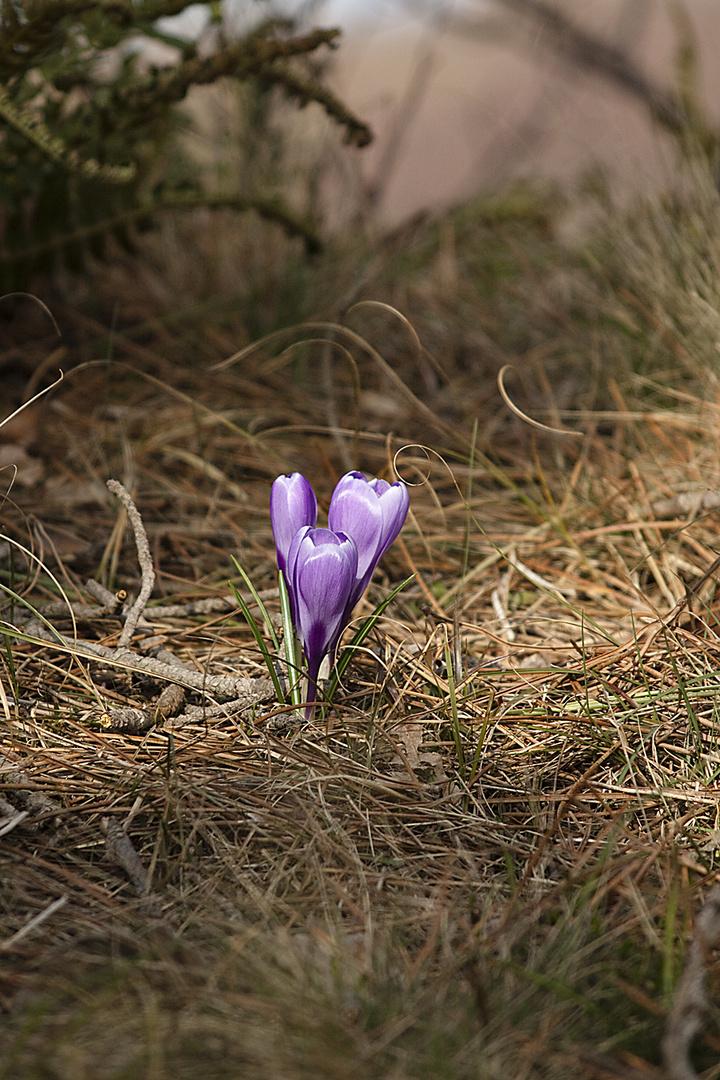 Erster Frühlingsdurchbruch
