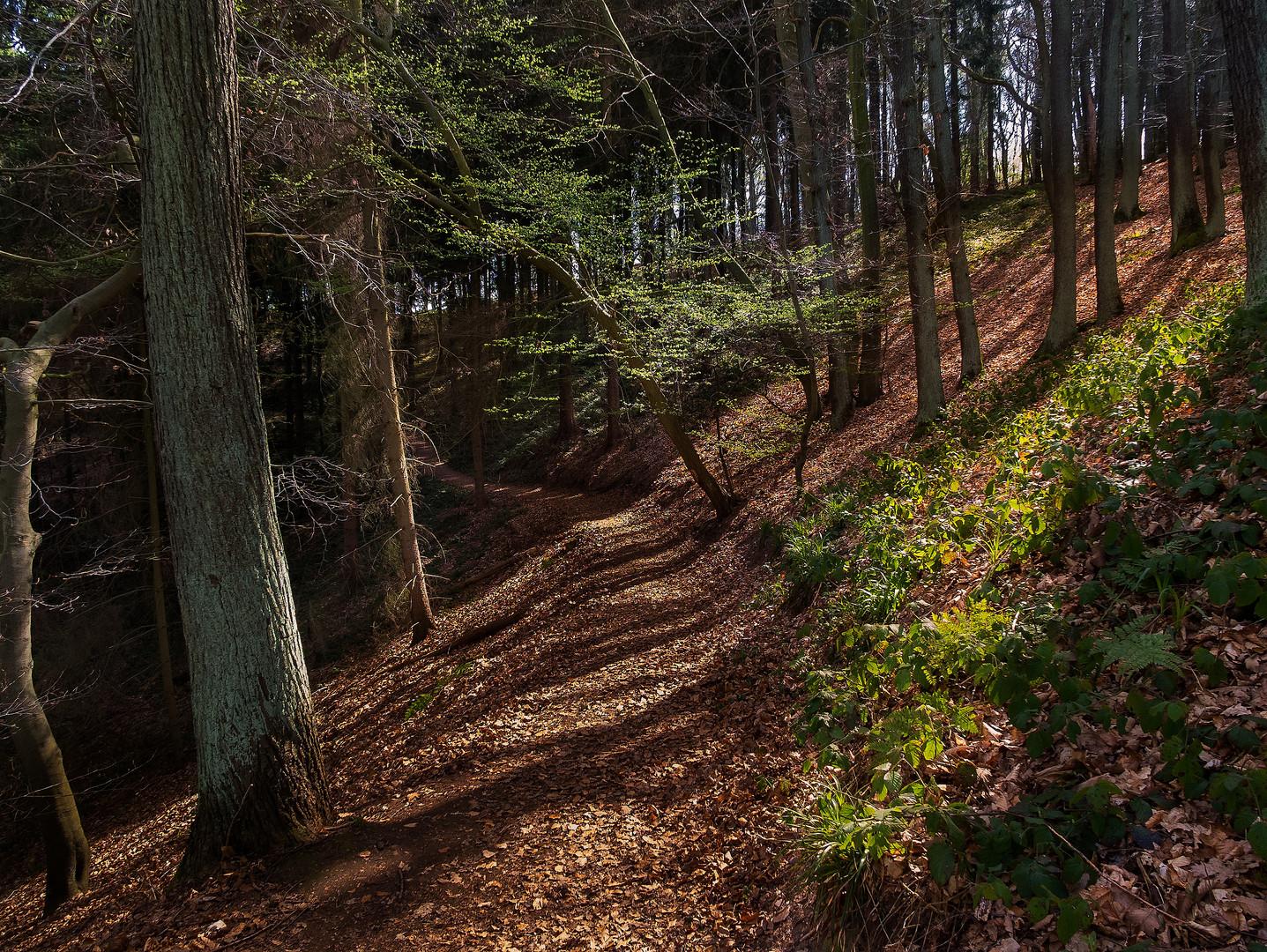Erster Frühlingshauch im Wald
