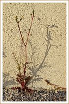 Erster Gruß vom Frühling / Primo cenno dalla primavera (1)