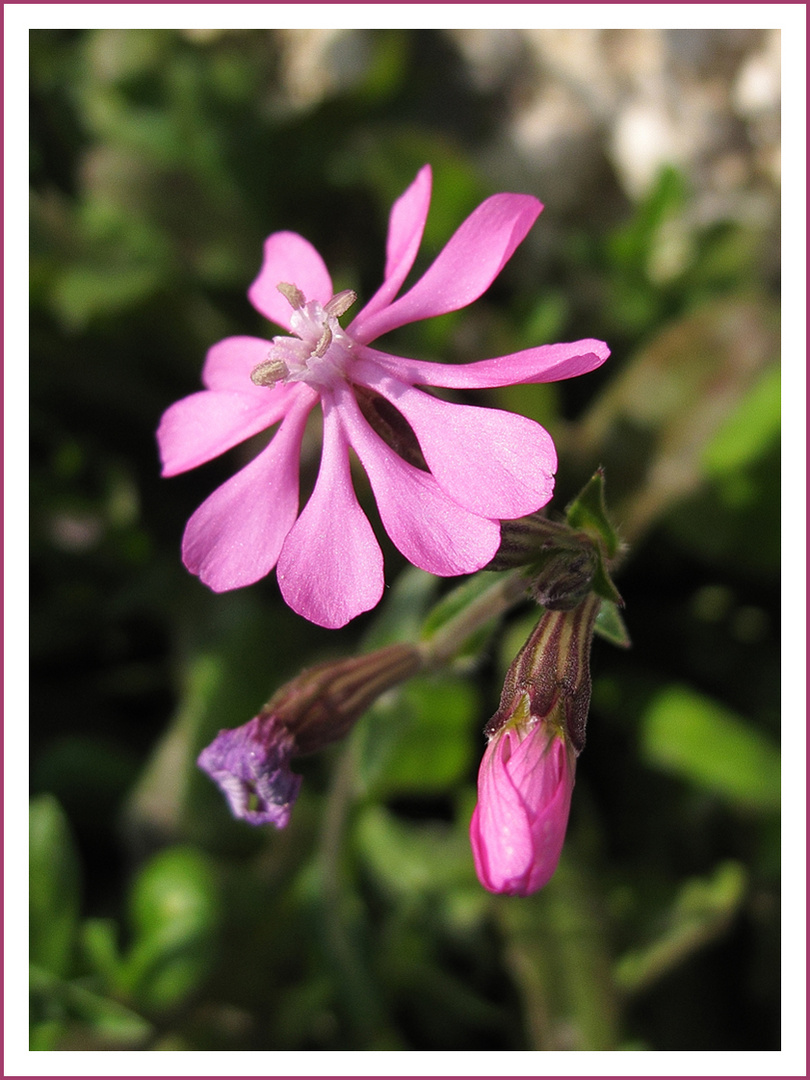 Erster Gruß vom Frühling / Primo cenno dalla primavera (3)