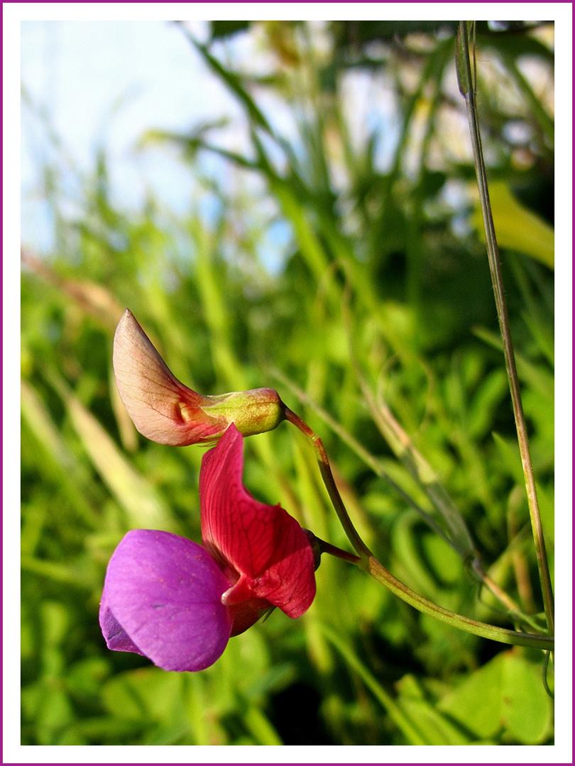 Erster Gruß vom Frühling / Primo cenno dalla primavera (4)