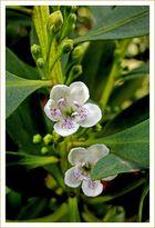 Erster Gruß vom Frühling / Primo cenno dalla primavera (5)