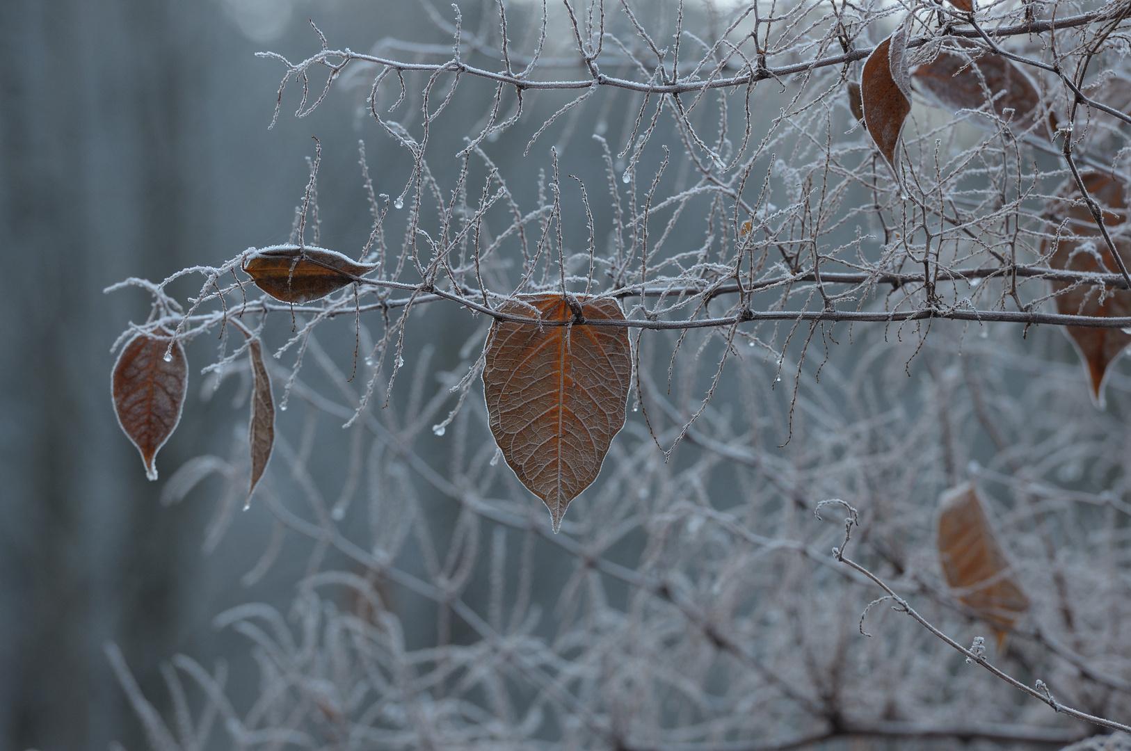 Erster Harter Frost