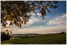 ...Erster Herbst-Gruß 2...
