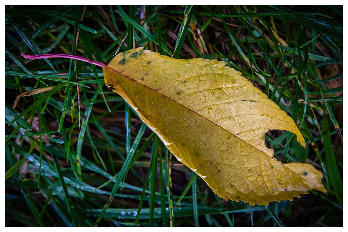 ...Erster Herbst-Gruß...