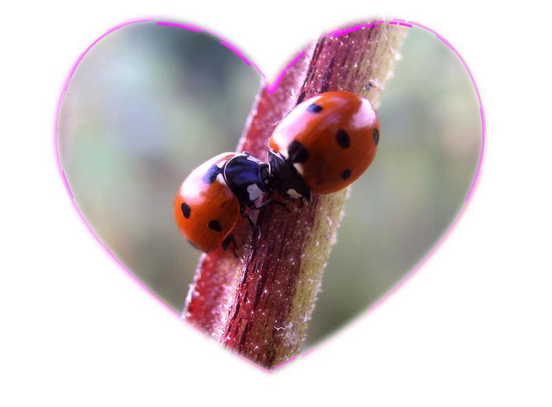 erster ku foto bild tiere wildlife insekten bilder auf fotocommunity. Black Bedroom Furniture Sets. Home Design Ideas