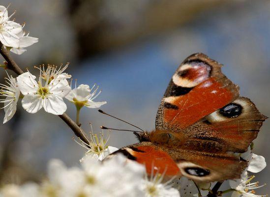 Erster Schmetterling....