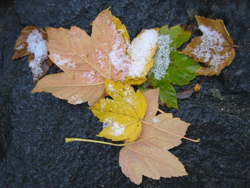 erster Schne im Herbst (2)