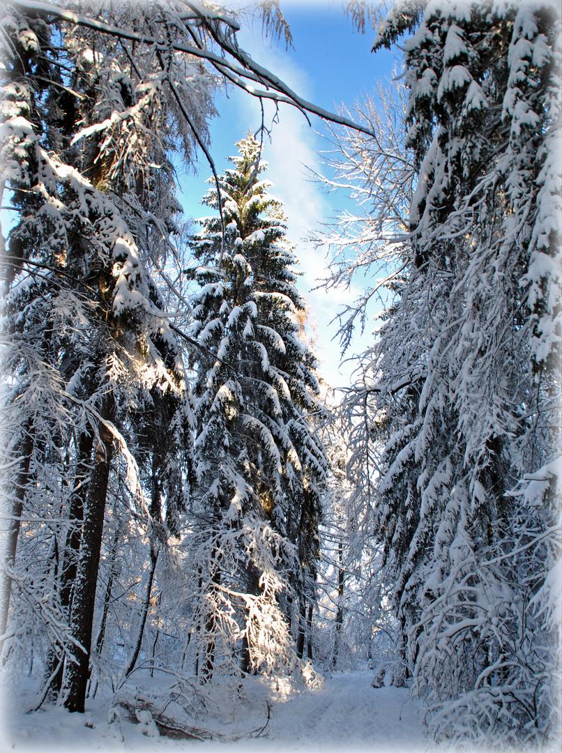 Erster Schnee 2012