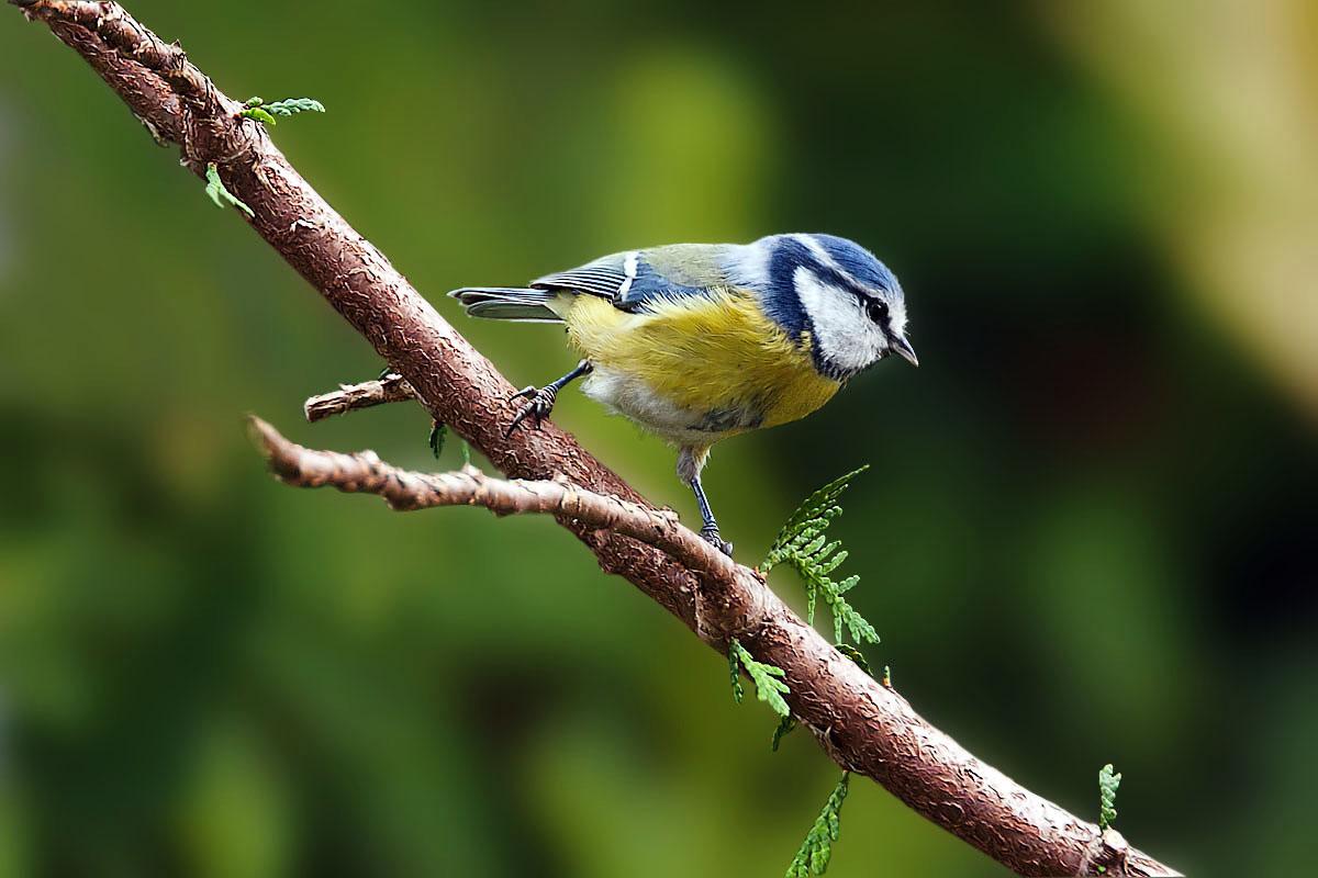 Erster Treffer bei der Vogelfotografie