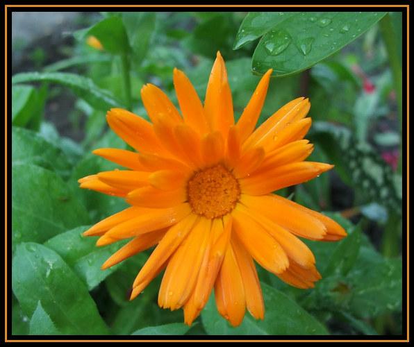 Erster Versuch Blume
