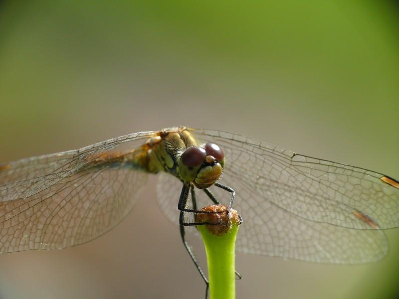 Erster Versuch Libelle