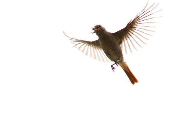 Erster Vogel-Flug-Foto-Versuch