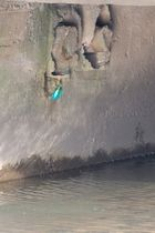 erstes Eisvogelfoto (DOKU)