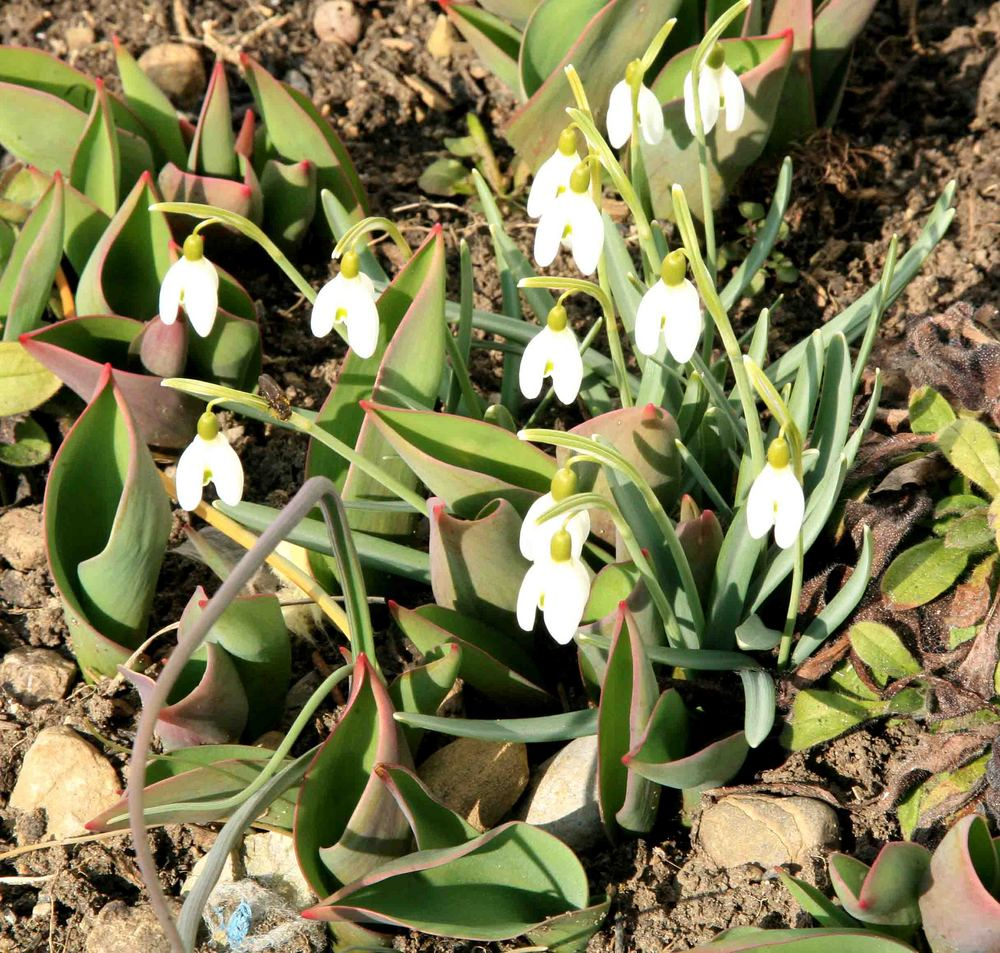 Erstes Frühlingserwachen im Tösstal