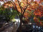 Erstes Herbstfoto