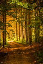 Erstes Herbstlicht