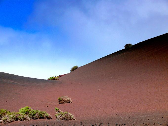 Erstes Leben auf Vulkanasche